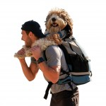 Рюкзак для переноски собакK9 Sport Sack® Rover