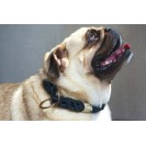 Ошейник для собак Ruff on the Streets Collar in Iron Grey - серый