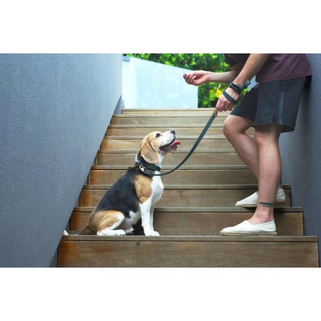 Поводок для собак Classic Leash in Woodland Green Size Size Guide - зеленый