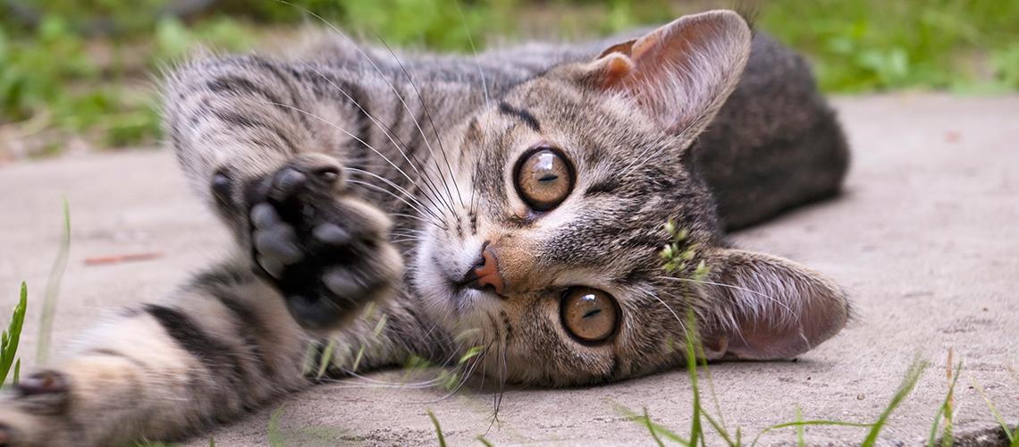 Советы и рекомендации по уходу за кошачьей шерстью